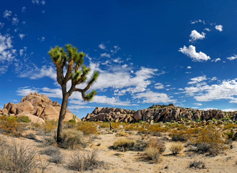 WPJI-palmsprings-joshuatree-walking-hiking-tour-1